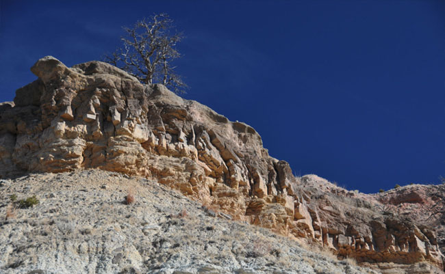 Rock Ridge and Tree